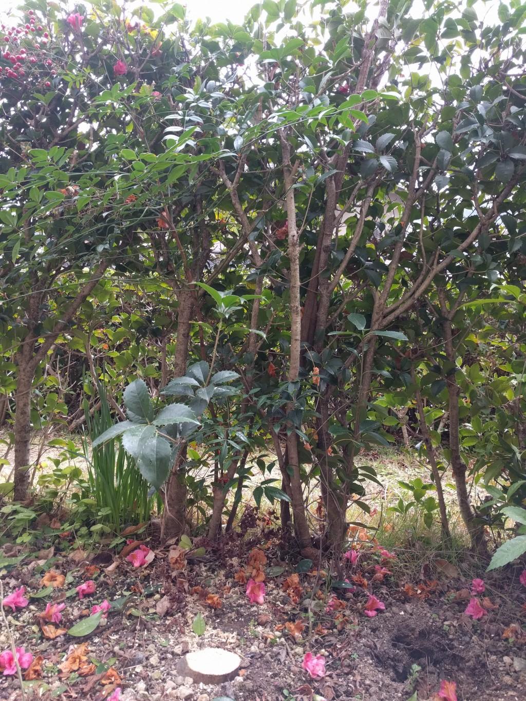 【北九州市八幡東区】庭木の伐採と、伐根後の処分のご依頼☆素早い対応にご満足いただけました!