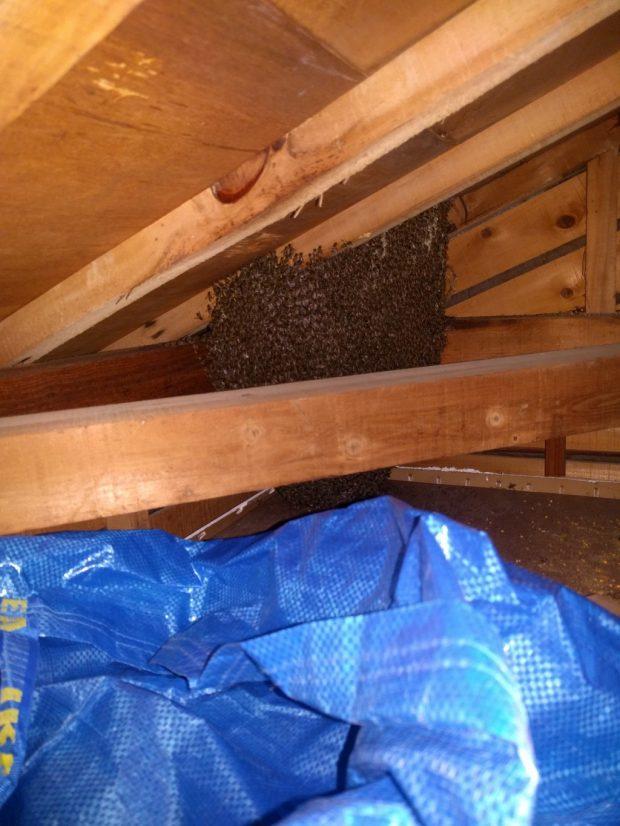 【北九州市門司区】蜂の巣駆除のご依頼 お客様の声