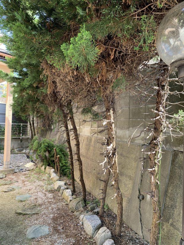 【福岡市東区】庭木の伐採のご依頼 お客様の声