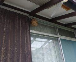 【北九州市若松区】スズメバチの巣の駆除のご依頼 お客様の声