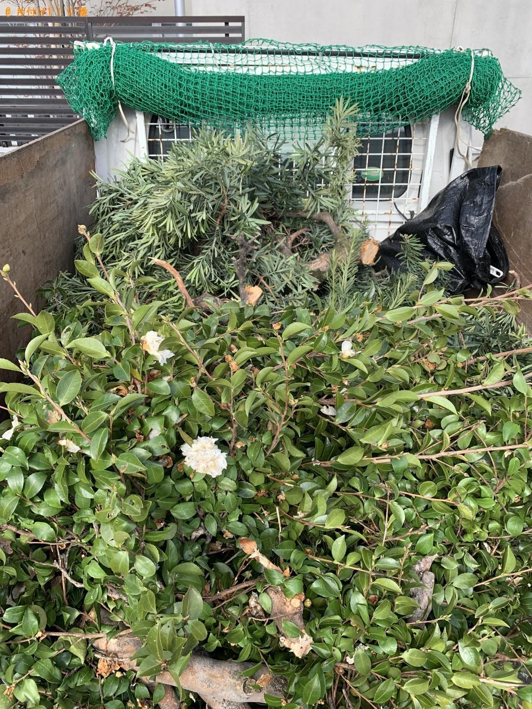 【福岡市中央区】伐採した木、バケツなどの回収・処分 お客様の声