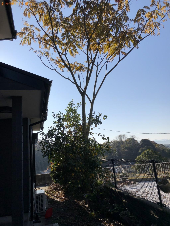 【京都郡苅田町】庭木の伐採と回収・処分ご依頼 お客様の声