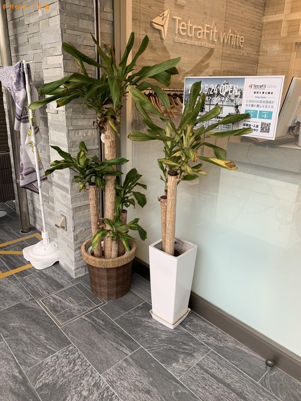【福岡市中央区】植木の回収・処分ご依頼 お客様の声