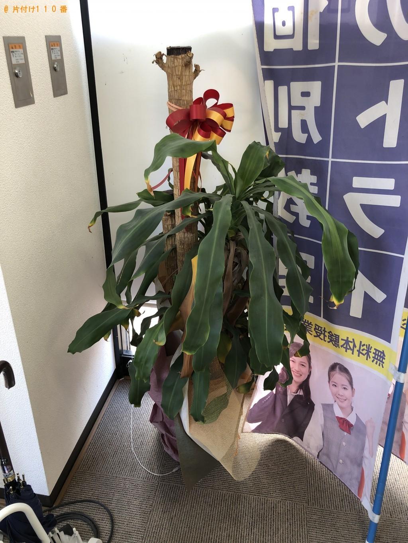 【中間市】観葉植物の回収・処分ご依頼 お客様の声