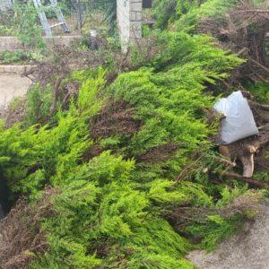 【行橋市】伐採してある木の回収・処分ご依頼 お客様の声