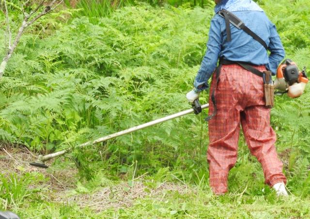 福岡市で草刈りにかかる料金相場は?追加料金や業者選びのコツまで解説