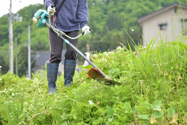 大川市で草刈りに最適な年3回の時期~楽に草刈りを終えるコツまで徹底解説